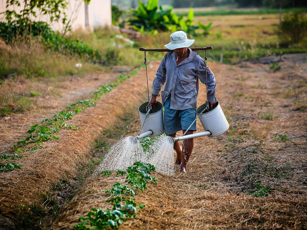 UNESCO estimates that agricultural activities use up between 60% and 70% of the world's fresh water